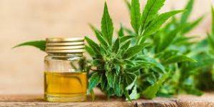 Cannabis Oil - onde comprar - forum - como aplicar