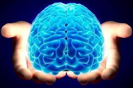 Neurocyclin - para melhor memória - pomada - preço - farmacia
